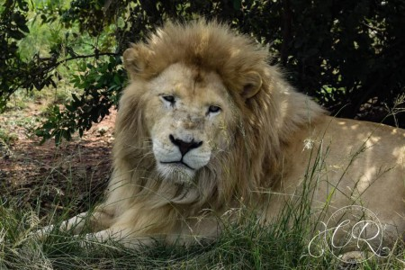 Elvis, Kai, Hercules, Taariq in Jugomaro Predator Park